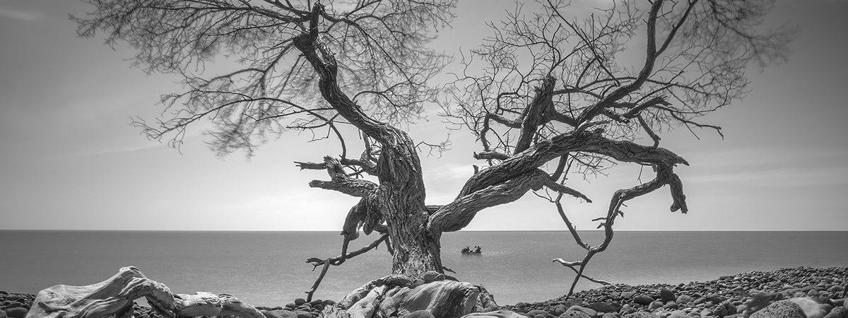 Harmony in Nature | Daniel Tjongari