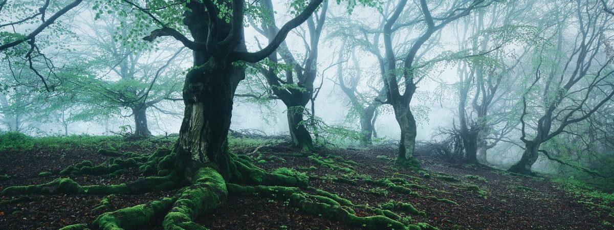 La belleza secreta de los árboles | Kilian Schönberger